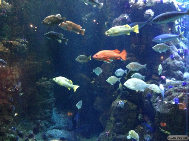 Aquarium Mk01