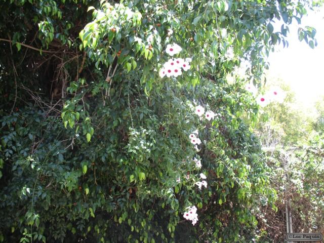 Garden 6 Mk06